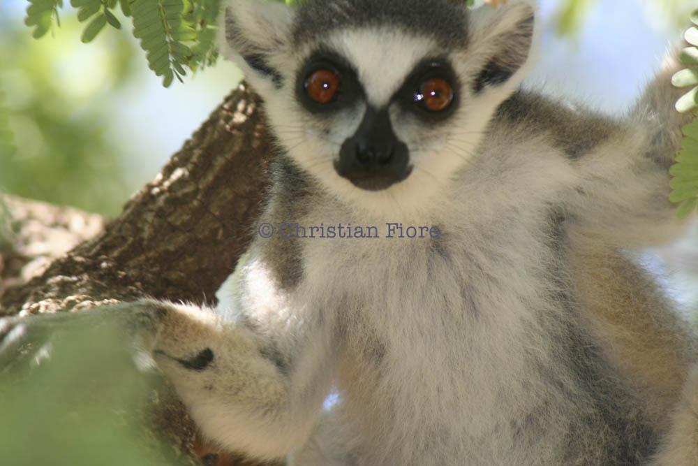Madagascar Surprises