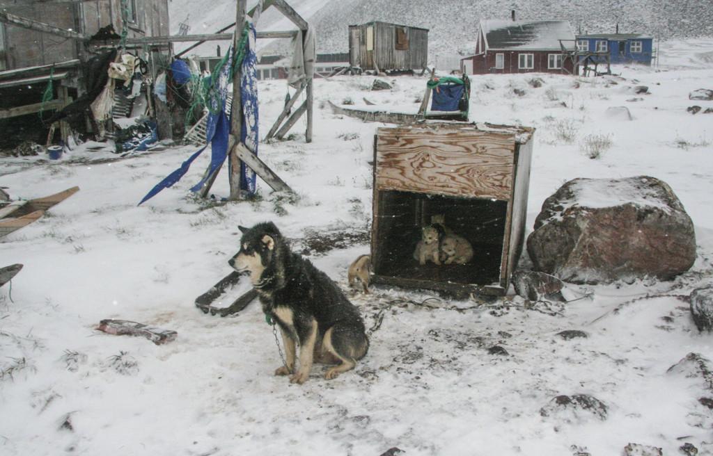 Greenland Savissivik – many more dogs than inhabitants
